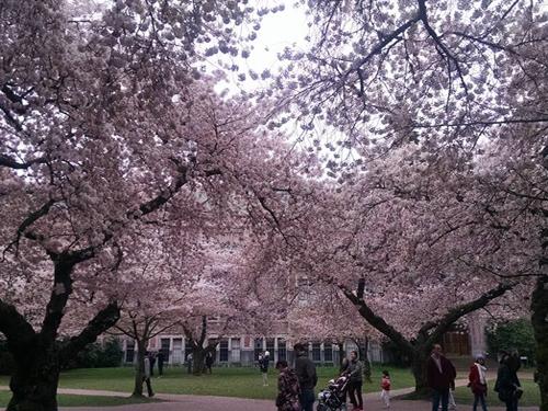 cerisiers en fleurs, galerie, valeurs et engagements