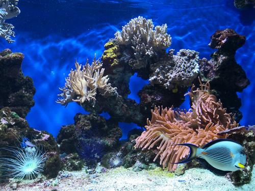 corail, galerie, valeur et engagement