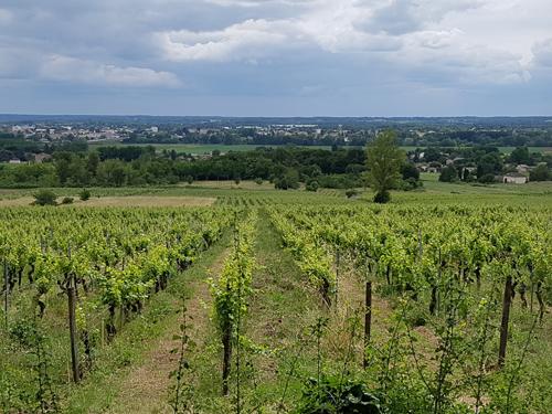 activité, division de la vie, viti-vinicole